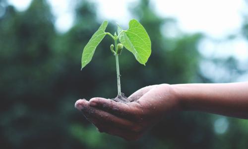 mso-klimaneutralitaet-blog